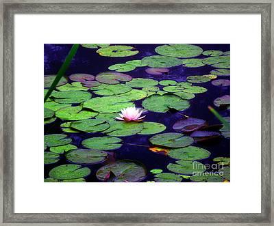 Enlightened Framed Print by Sybil Staples