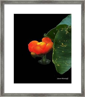 Enlightenment Framed Print by Steve Warnstaff