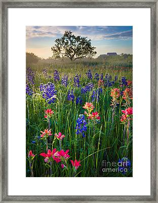 Ennis Morning Framed Print by Inge Johnsson