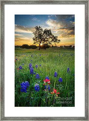 Ennis Tree Framed Print