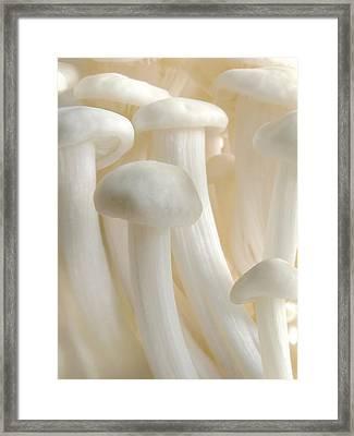 Enoki Forest  Framed Print by John Poon