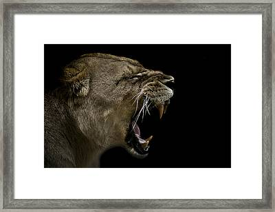 Enraged Framed Print by Paul Neville