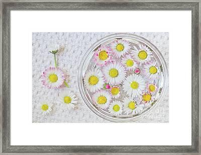 Enslish Daisies In A Jar Framed Print by Masako Metz