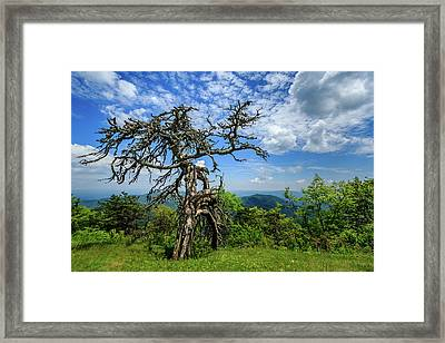 Ent At The Top Of The Hill - Color Framed Print