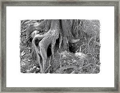 Ent Foot Framed Print