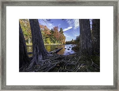 Entangled Framed Print by Everet Regal