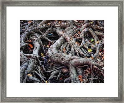 Entanglement Framed Print by Donna Blackhall