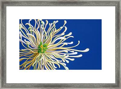 Entendulating Serene Blossom Framed Print