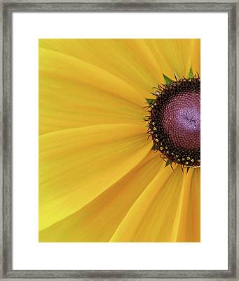 Framed Print featuring the photograph Enter Stage Left by David Coblitz