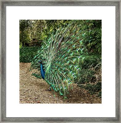 Enter Stage Right Framed Print by Jean Noren