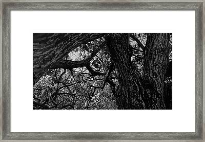 Enter The Woods In Black And White Framed Print