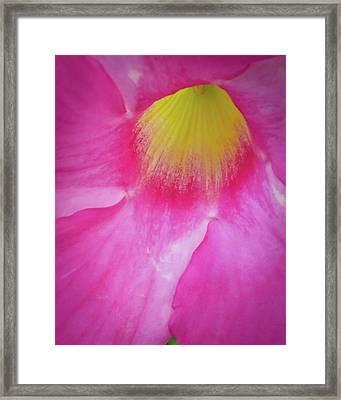 Framed Print featuring the photograph Entering Mandavilla by David Coblitz