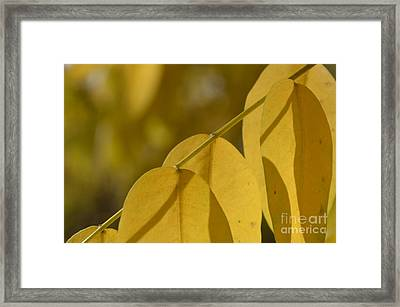 Enthusiasm 5 Framed Print