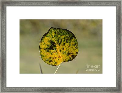 Enthusiasm 7 Framed Print