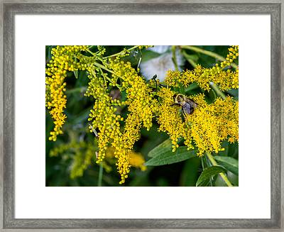 Enticing Yellow 2 Framed Print