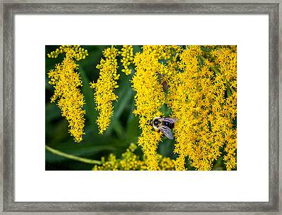 Enticing Yellow Framed Print