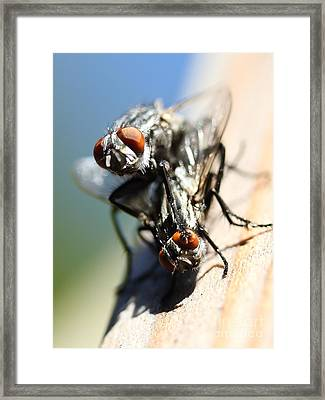 Entomologists Discover Why People Want To Be A Fly On The Wall Framed Print by Wingsdomain Art and Photography