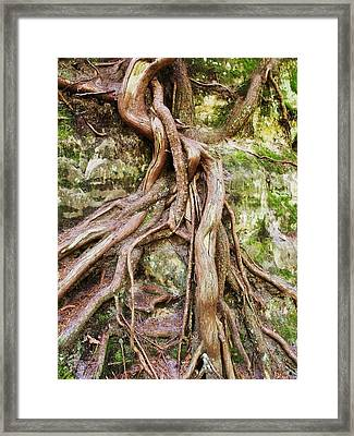Entwined Framed Print by Anna Villarreal Garbis