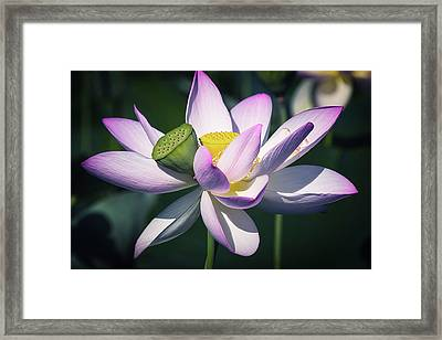 Framed Print featuring the photograph Entwined... by Cindy Lark Hartman