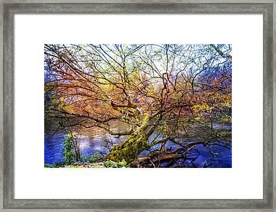 Entwined Framed Print by Debra and Dave Vanderlaan