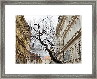 Enveloped Framed Print