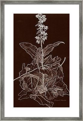 Epipactis Helleborine Orchid Framed Print