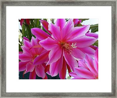 Epiphyllum Framed Print