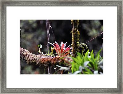 Epiphytic Plants Framed Print by Wes Hanson