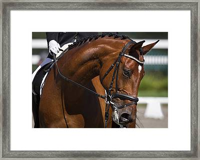 Equestrian At Work Framed Print by Wes and Dotty Weber