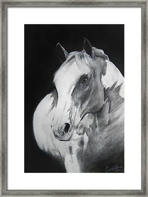 Equestrian Beauty Framed Print by Carrie Jackson
