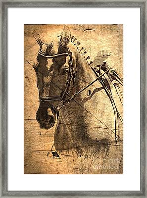 Equestrian Framed Print by Clare Bevan
