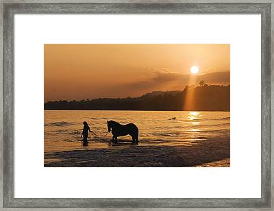 Equine Beach Time Framed Print by Nick Sokoloff
