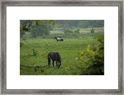 Equine Buddies Framed Print