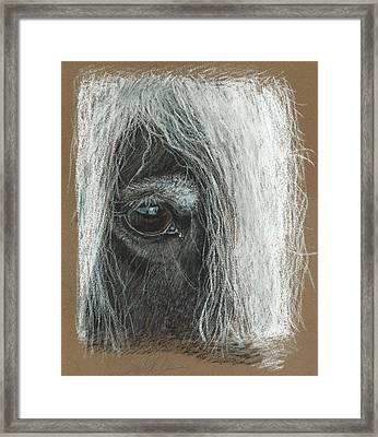 Equine Eye Detail Framed Print by Terry Kirkland Cook