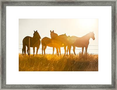 Equine Glow Framed Print by Todd Klassy