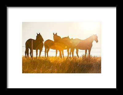 Chestnut Horse Framed Prints