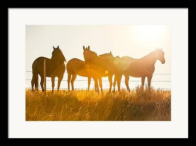 Horse Breed Framed Prints