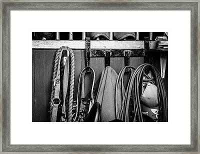 Equine Life Framed Print by Samuel Whitton
