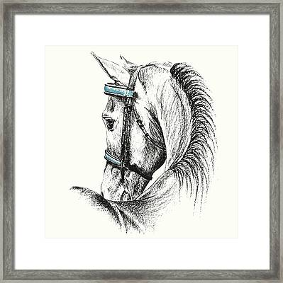 Equine Sketches Framed Print by JAMART Photography
