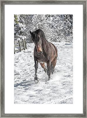 Equine Snowy Frolic  Framed Print