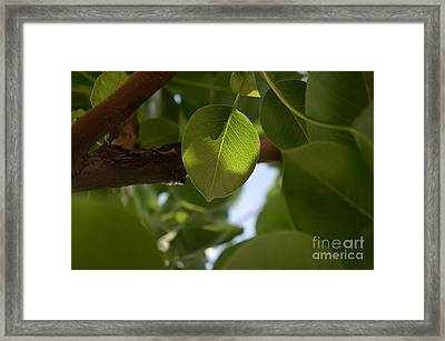 Equipoise In Green Framed Print