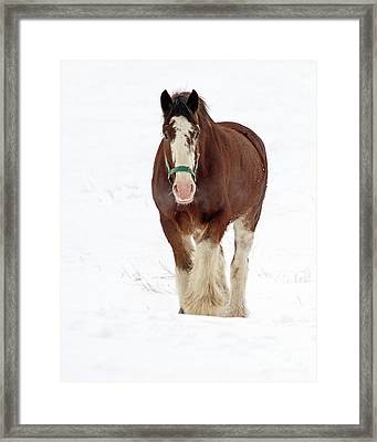 Framed Print featuring the photograph Equus Caballus.. by Nina Stavlund