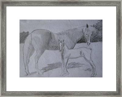 Equus Caballus Framed Print by SAIGON De Manila