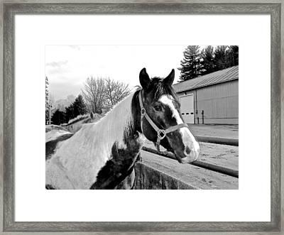 Equus Framed Print by Elizabeth Tillar
