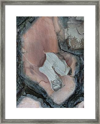 Equus - Tree Bark Art Framed Print
