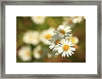 Erigeron Annuus Daisy Like Wildflower Framed Print