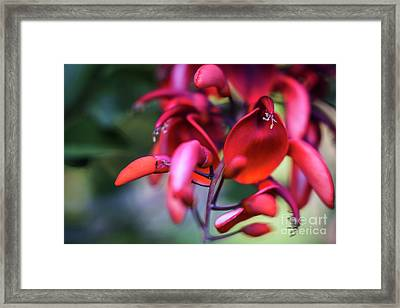 Framed Print featuring the photograph Erythrina Crista Galli Flower Spain Square Cadiz Spain by Pablo Avanzini