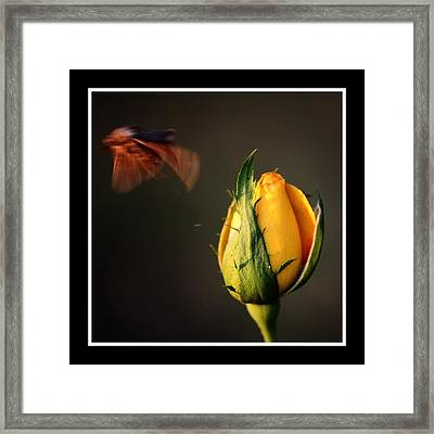 Escape Framed Print by KayeCee Spain