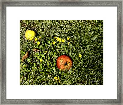 Escapees-2 Framed Print by Nancy Marie Ricketts