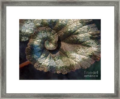 Escargot Begonia Framed Print